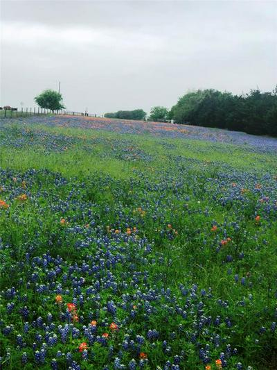 0 CORNER OF MAECKEL RD ROAD, Bleiblerville, TX 78931 - Photo 2