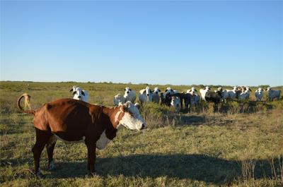 0 COUNTY ROAD 446, Harwood, TX 78632 - Photo 2