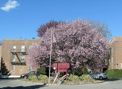40 DAVENPORT AVE APT 2B, New Rochelle, NY 10805 - Photo 2