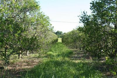 0 SE COUNTY ROAD 25, Weirsdale, FL 32195 - Photo 1