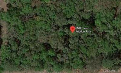 11021 N ANDRION PATH, Inglis, FL 34449 - Photo 2