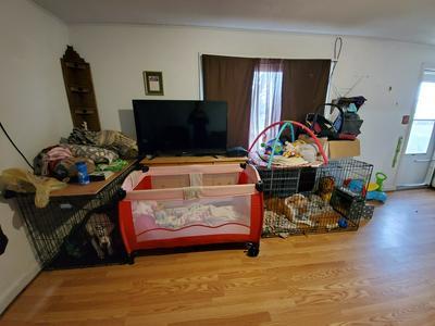 17973 STATE HIGHWAY 231, Nevada, OH 44849 - Photo 2