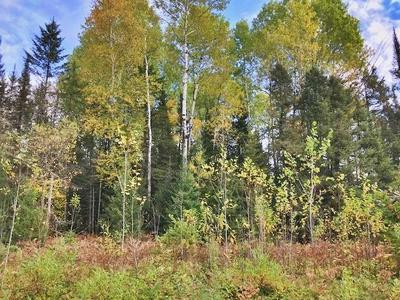 3.67 ACRES ROSS LAKE RD, Caswell, WI 54511 - Photo 1
