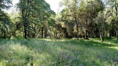 2760 STAGECOACH RD, Placerville, CA 95667 - Photo 1