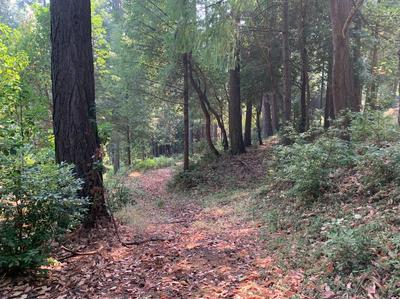 2531 KITTYWAKE LN, Camino, CA 95709 - Photo 1