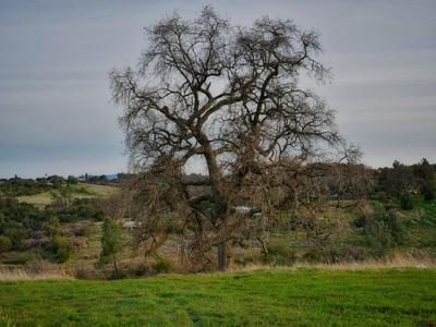225 BLAZEFORD GULCH, Oroville, CA 95966 - Photo 1