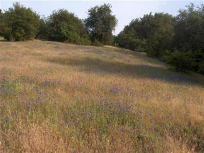 3225 RUSTIC WOODS CT, Loomis, CA 95650 - Photo 2