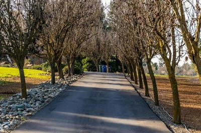 11770 RISING RD, WILTON, CA 95693 - Photo 1