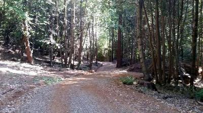 525 SLEIGHVILLE CREEK RD, Sierra City, CA 96125 - Photo 2