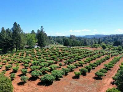 16277 NEWTONIAN WAY, Grass Valley, CA 95945 - Photo 1