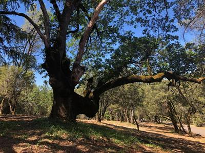0 PUERTA DEL SOL, Camino, CA 95709 - Photo 1