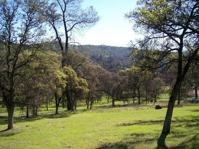 3 DEER HOLLOW TRAIL, Browns Valley, CA 95918 - Photo 1