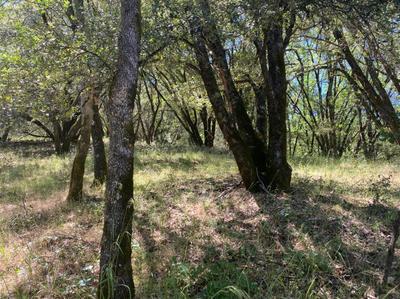 16524 ANNIE DR, Grass Valley, CA 95949 - Photo 1