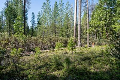 0 3.4 ACRES HUGGY BEAR LANE, Grizzly Flats, CA 95636 - Photo 2