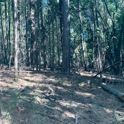 17725 DEBBIE CT N, Pioneer, CA 95666 - Photo 2