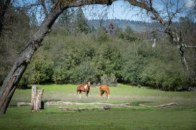 9872 EVANS WAY, Oregon House, CA 95962 - Photo 2