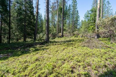 0 3.4 ACRES HUGGY BEAR LANE, Grizzly Flats, CA 95636 - Photo 1