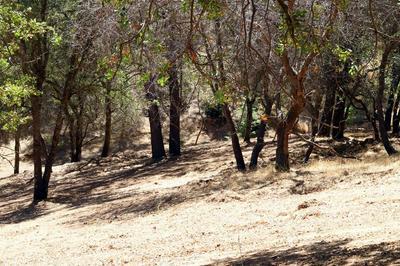 1573 ZAPATA DR, El Dorado Hills, CA 95762 - Photo 2