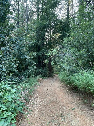 0 DE GROOT LANE, Camptonville, CA 95922 - Photo 1