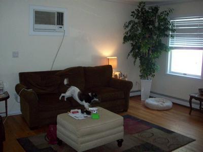 184 HOSNER MOUNTAIN RD # 1, East Fishkill, NY 12533 - Photo 2