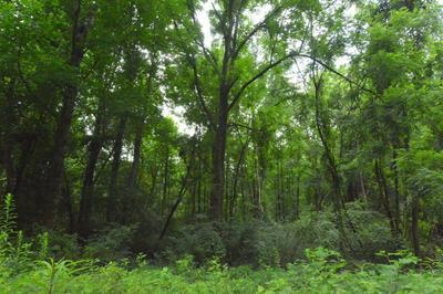 14 WALNUT BR # 17, Robbinsville, NC 28771 - Photo 2