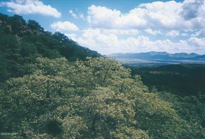 POCAHONTAS ROAD, Patagonia, AZ 85624 - Photo 2