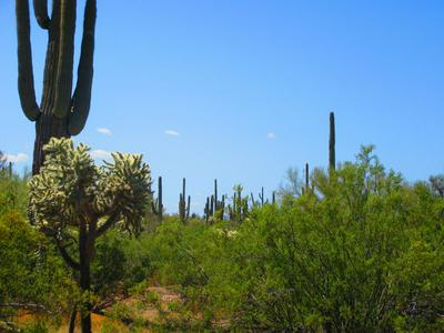 XX AMBER SUNRISE #40 ACRE, Marana, AZ 85658 - Photo 2