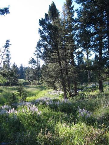 LOT 12 HIGH SPRINGS LANE #TRACT 12, HELMVILLE, MT 59843 - Photo 2