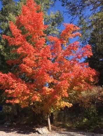 1025 SAINT ANDREWS DR, Columbia Falls, MT 59912 - Photo 1