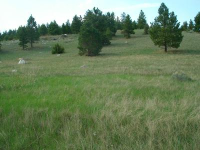 TRACT D FALCON HEIGHTS DRIVE, Clancy, MT 59634 - Photo 2