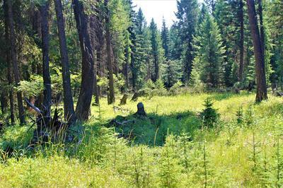 NHN POMEROY TRAIL, Eureka, MT 59917 - Photo 1