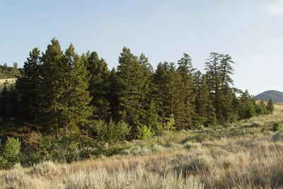 TBD WINEGLASS GRAZING RANCH, Helmville, MT 59843 - Photo 2