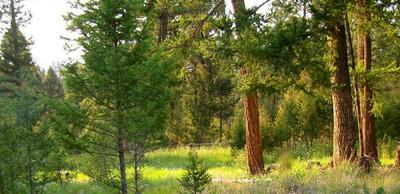 LOT 12 HIGH SPRINGS LANE #TRACT 12, HELMVILLE, MT 59843 - Photo 1
