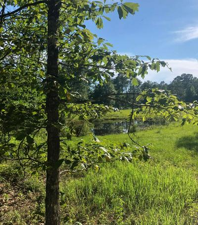 0 FERRY POINT RD, Gautier, MS 39553 - Photo 2