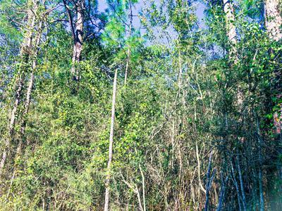 0 GAUTIER VANCLEAVE RD, Gautier, MS 39553 - Photo 2