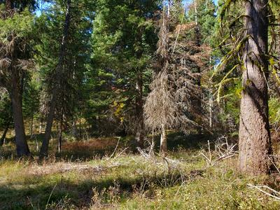 486 CAMMY DR, McCall, ID 83638 - Photo 2