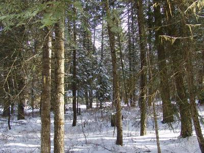 576 TEEPEE RD, Cascade, ID 83611 - Photo 1