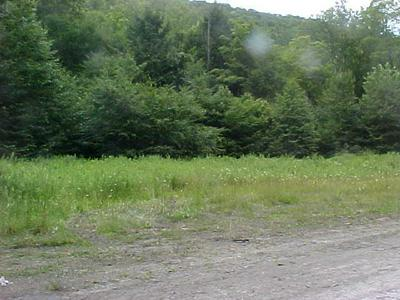 . WEST BRANCH ROAD, Mansfield, PA 16933 - Photo 1