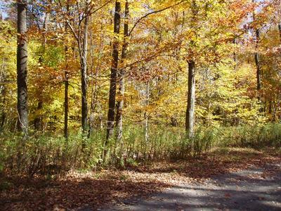 9999999 COYOTE ROAD, Covington, PA 16917 - Photo 1