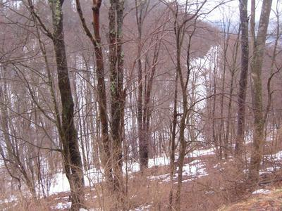 00 DUTCH HILL, Coudersport, PA 16915 - Photo 1