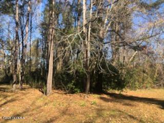 412 S THOMPSON ST, Whiteville, NC 28472 - Photo 1