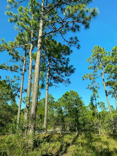 168 ACRES OFF OLD GEORGETOWN RD, Shallotte, NC 28470 - Photo 2