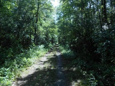 0 COOPER LANE, Jamesville, NC 27846 - Photo 2