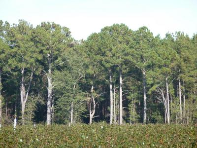 48 ACRE OFF OLD FAYETTEVILLE ROAD, Garland, NC 28441 - Photo 1