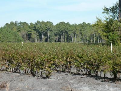 48 ACRE OFF OLD FAYETTEVILLE ROAD, Garland, NC 28441 - Photo 2