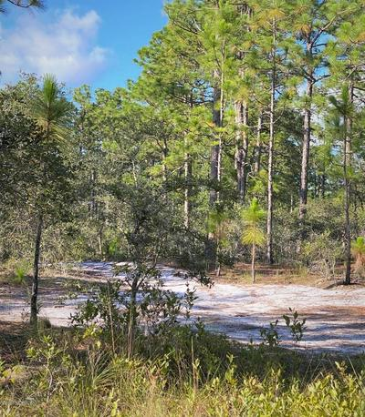 168 ACRES OFF OLD GEORGETOWN RD, Shallotte, NC 28470 - Photo 1
