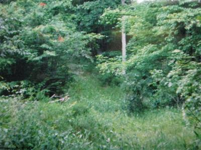 RT 219 N KERENS HIGHWAY, Montrose, WV 26283 - Photo 2