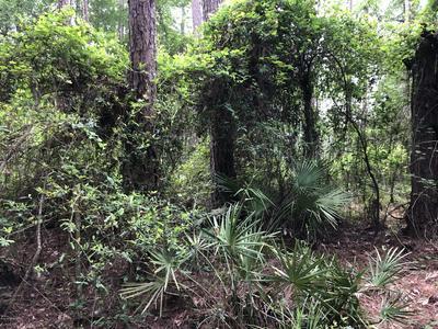 0 SOUTHERN TRL, Sanderson, FL 32087 - Photo 1