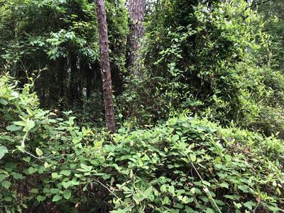 0 SOUTHERN TRL, Sanderson, FL 32087 - Photo 2