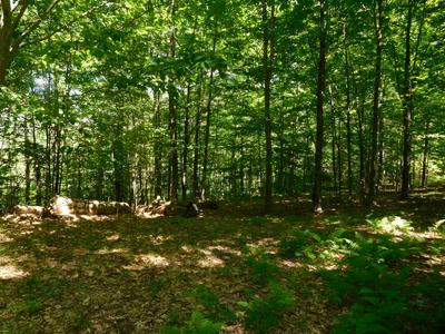 172 SMITH HILL RD, Franklin, NH 03235 - Photo 2